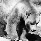 Bear by Niamh Harmon