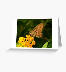 Longtail. Greeting Card