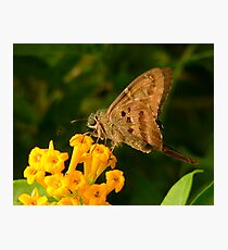 Longtail. Photographic Print