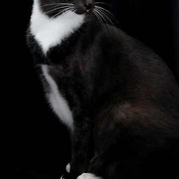 My gorgeous Smokey by windflowers43