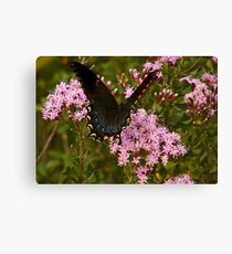 Orchard Swallowtail. Canvas Print