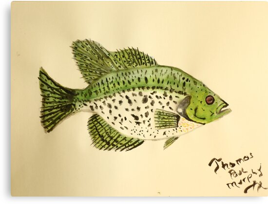 Crappie by Thomas Murphy