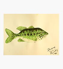 Large Mouth Bass Photographic Print