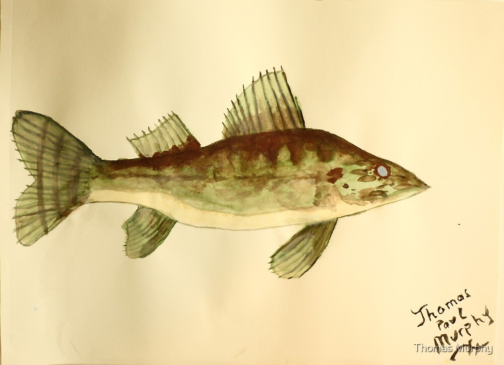 Walleye by Thomas Murphy