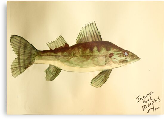 Walleye by Thomas Murphy