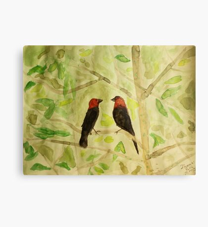 Brown Headed Cowbirds Metal Print