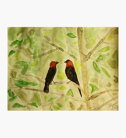 Brown Headed Cowbirds Photographic Print