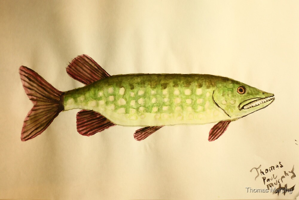 Northern Pike by Thomas Murphy