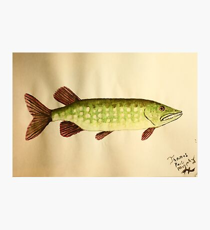 Northern Pike Photographic Print