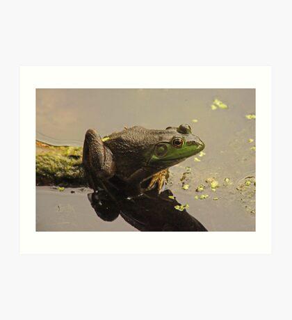 Frog 8376 Art Print