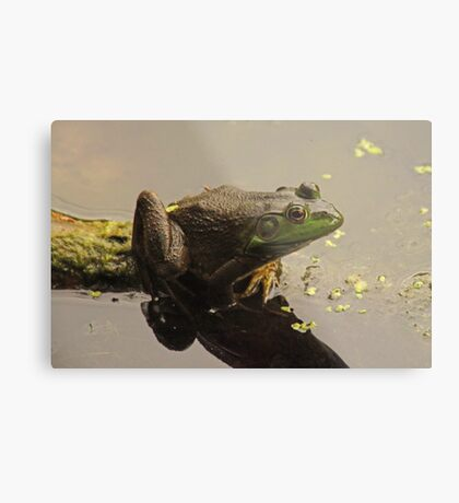 Frog 8376 Metal Print