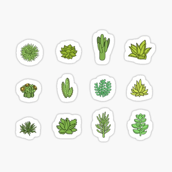Succulents and cactus. For cacti plant lover Sticker