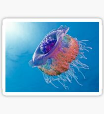 Crown Jellyfish Sticker
