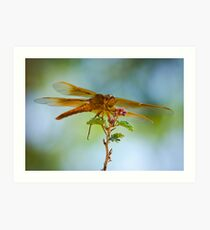 Red Skimmer Dragonfly  Art Print