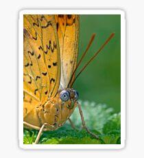 Julia Butterfly Sticker