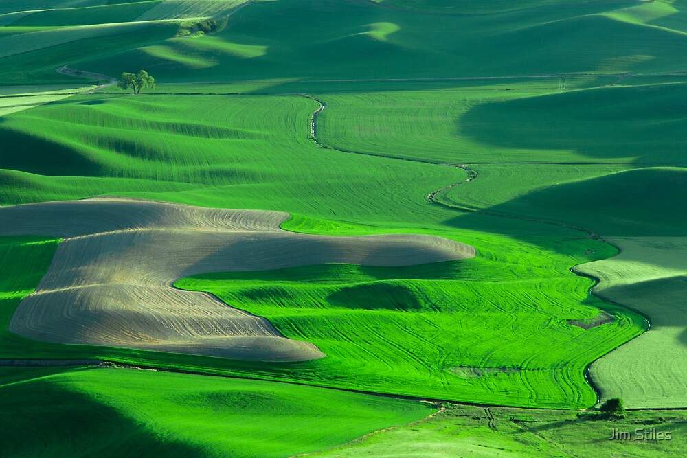 Lone Tree on the Palouse by Jim Stiles