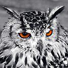 Owl Eyes by John Dalkin