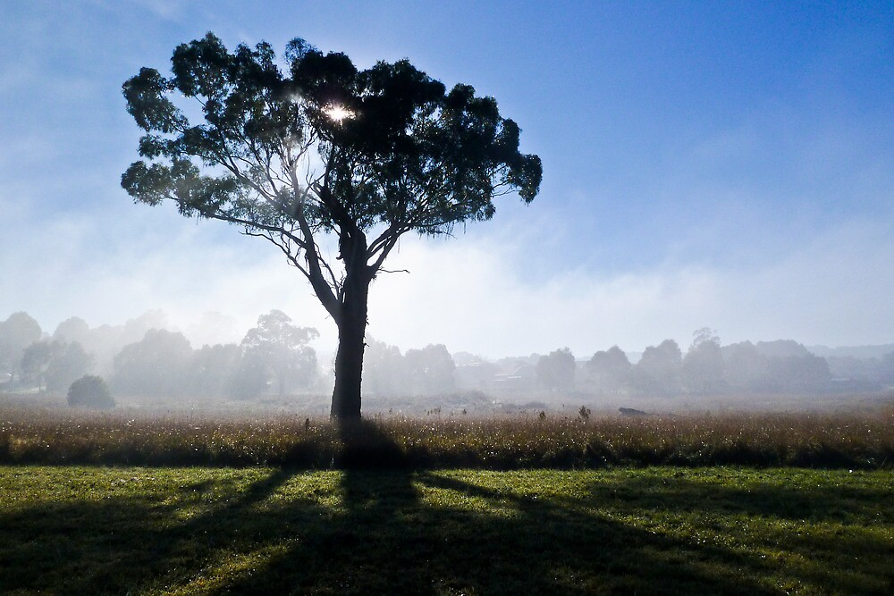 Misty Tree 1 by Antonia  Valentine