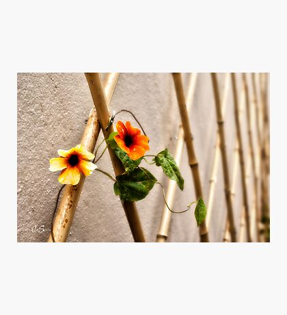 Floral Art Photographic Print