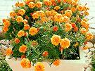Flower box  by Riko2us