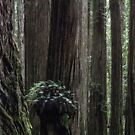 Redwood Forest by Jeannie Peters