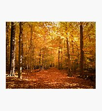 Scenic Leaf Covered Path in a Yellow Mystical Fall Forest ~ Autumn Foliage Landscape Photographic Print