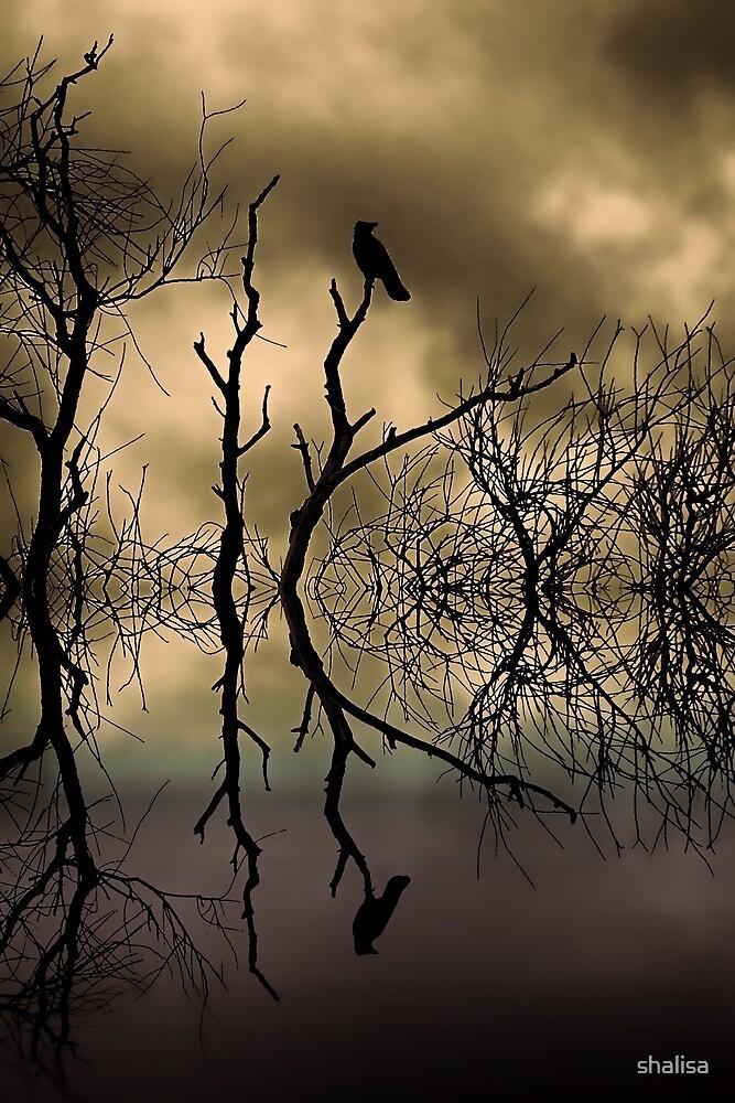Twilight by shalisa