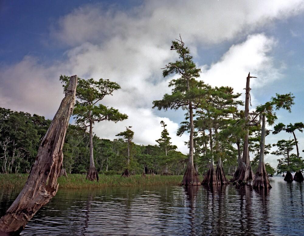 Blue Cypress Lake #2 by chris kusik