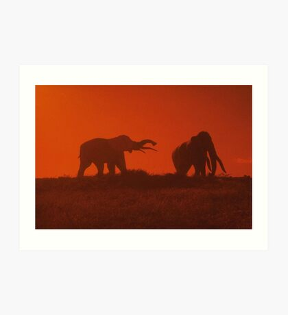 Elephant Sunset Art Print