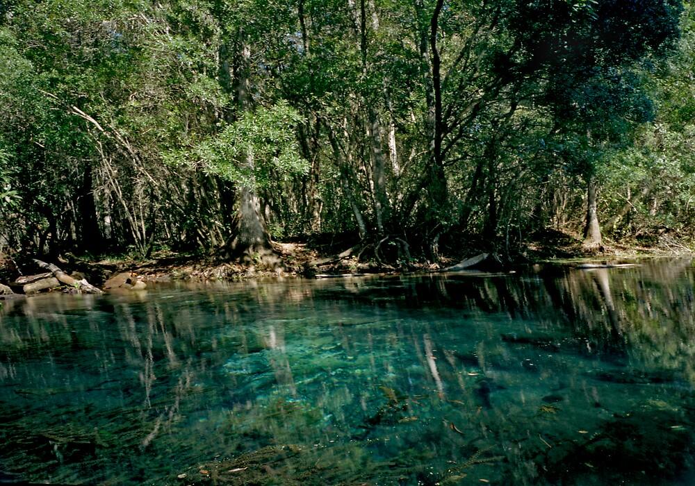 Wacissa Springs #2. by chris kusik