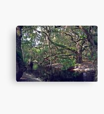 Parker Slough #1 Canvas Print
