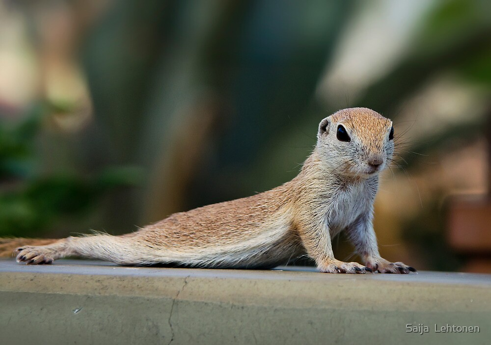Yoga Ground Squirrel Style  by Saija  Lehtonen