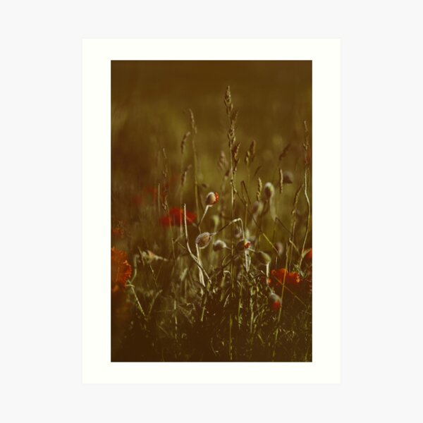 warm meadow Art Print