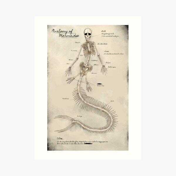 Mermaid Skeleton Poster  Art Print