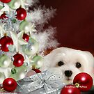 Snowdrop the Maltese at Christmas by Morag Bates