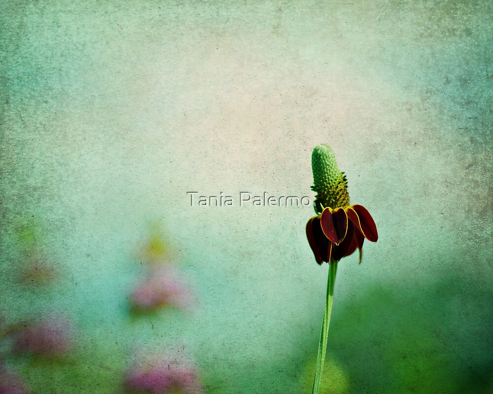 graceful dance of the red tutu by Tania Palermo