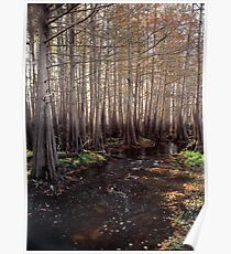 Cypress Swamp. Jane Green Creek #5. Poster