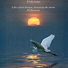 I'll Fly Away by Kelly Rockett-Safford