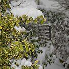 Winter Fall by Tsitra
