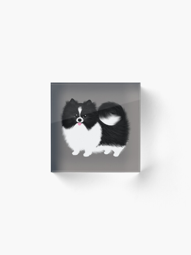 Alternate view of Black and White Parti Pomeranian   Cute Black and White Fluffy Dog Acrylic Block