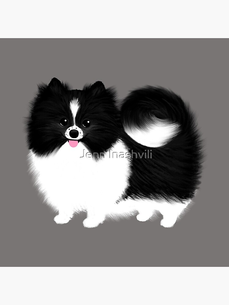 Black and White Parti Pomeranian   Cute Black and White Fluffy Dog by ShortCoffee