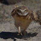 Where is my burrow................... by Robbie Knight