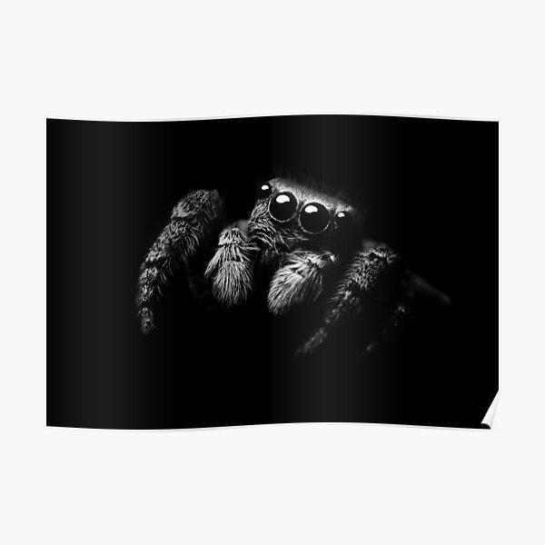 Black & White Jumping Spider Print Poster