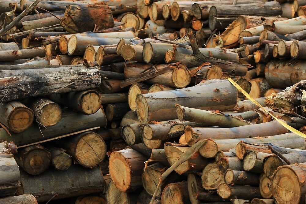 Pile of Firewood by rhamm