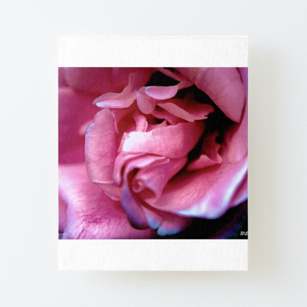 Pink Bloom 5 Canvas Mounted Print
