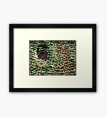 Lots of little leaves - (almost) hiding a wall Framed Print