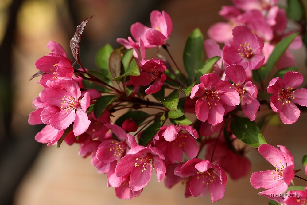 Pink Spring 2 by marybedy
