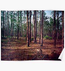 Pine Forest #1. Split Oak. Poster