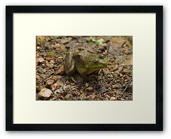 Frog January by Thomas Murphy