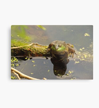 Frog February Metal Print